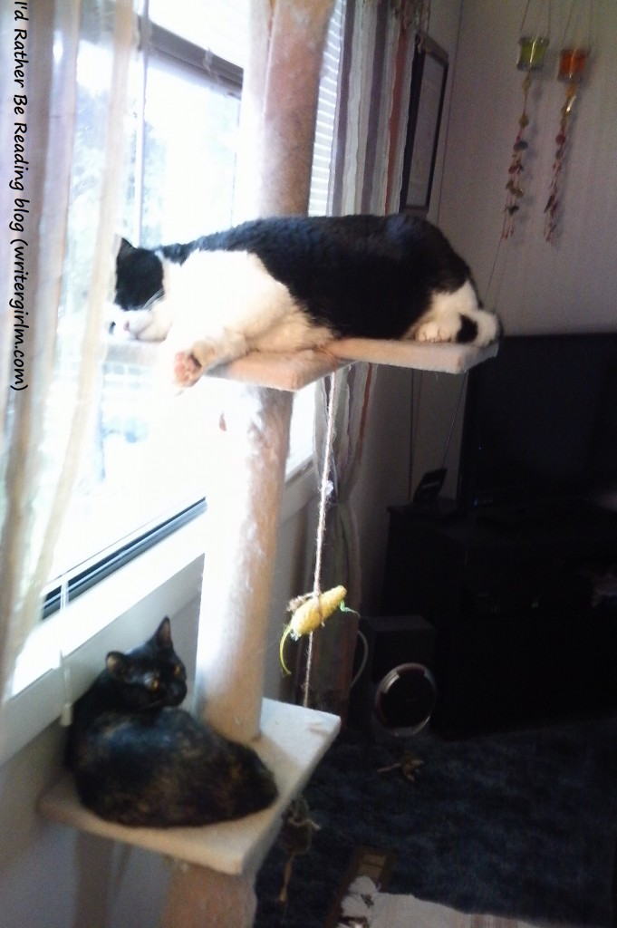 Max and Jiao on cat tree