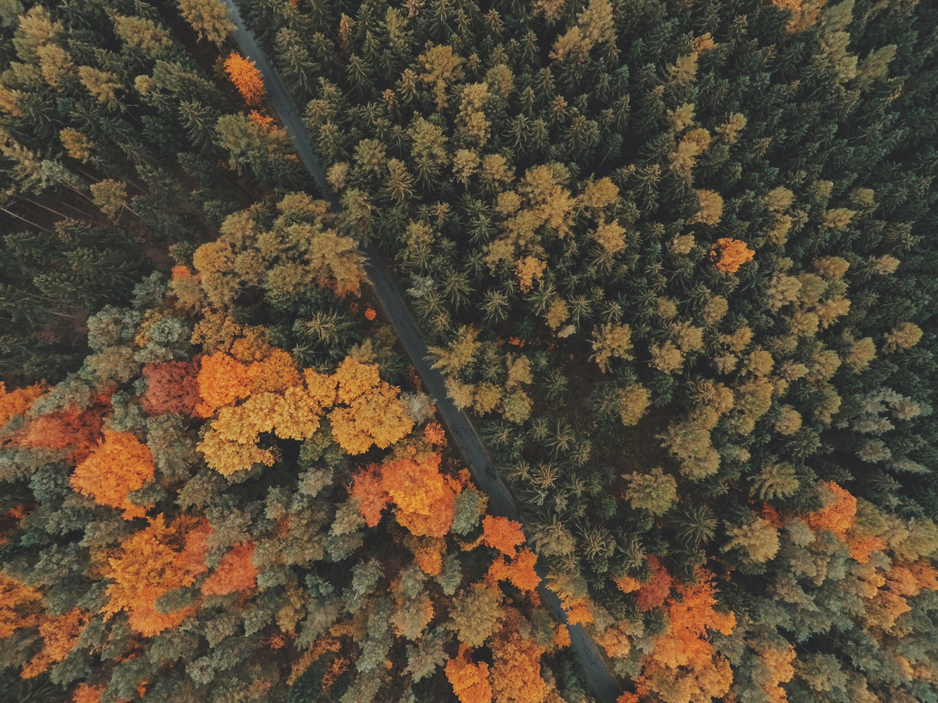 Aerial shot of autumn leaves