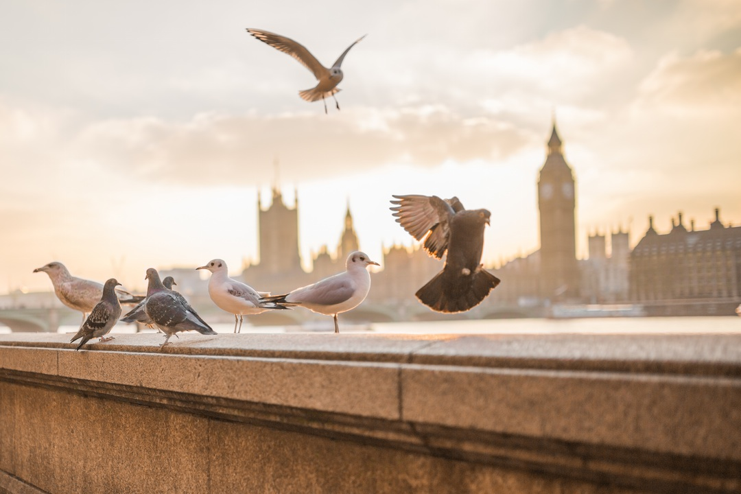 Taking flight in London