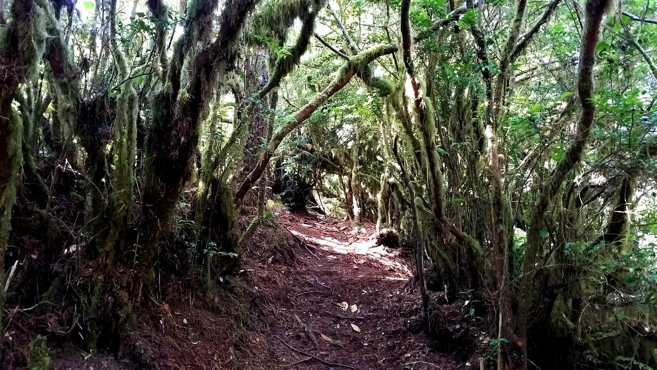 Hhobbit Trail near Heceta Head