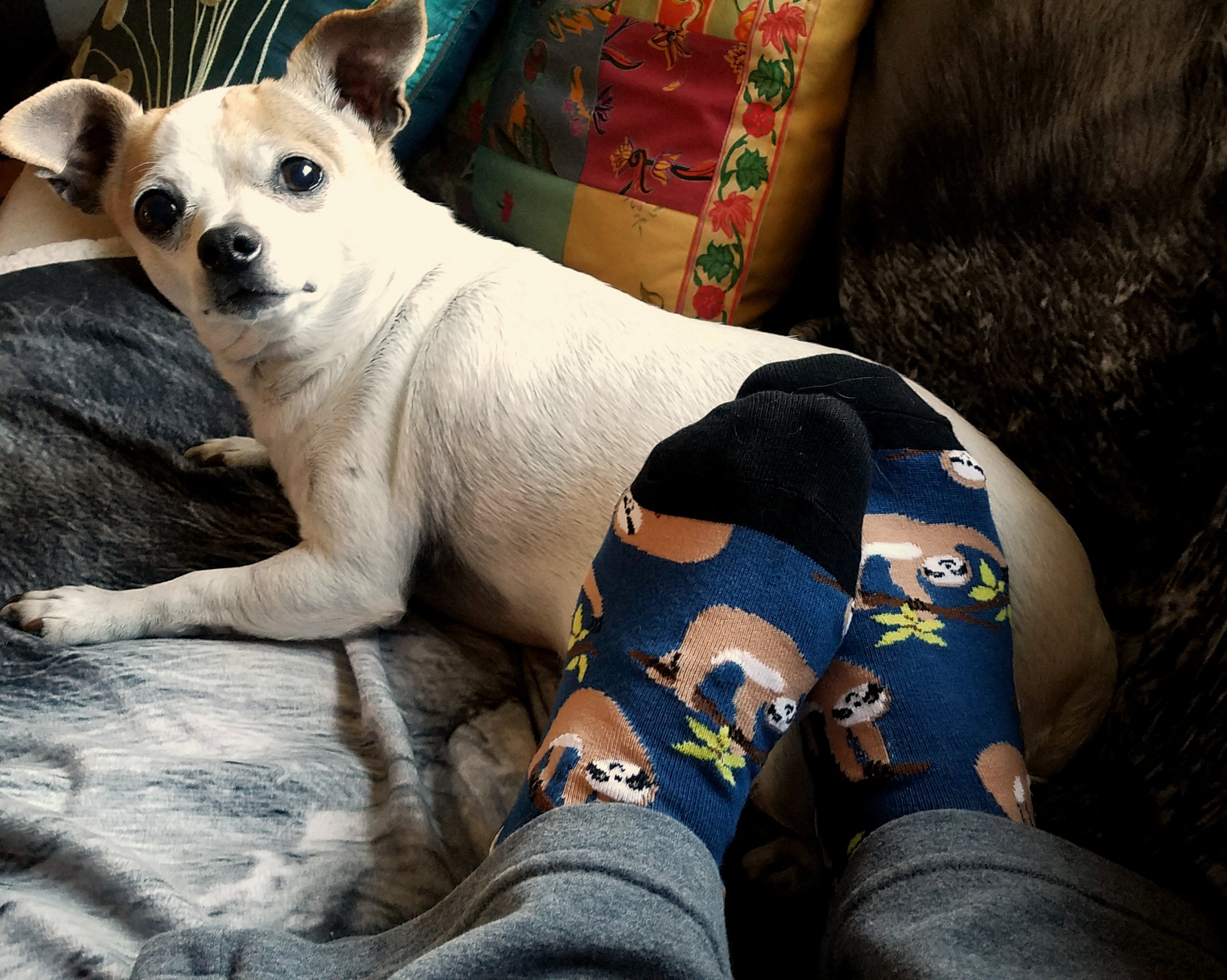 Coco Bean approves of these socks, which help support conservation efforts for endangered animals.